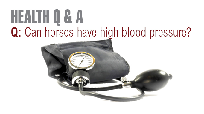 Thumbnail for Can Horses Have High Blood Pressure?