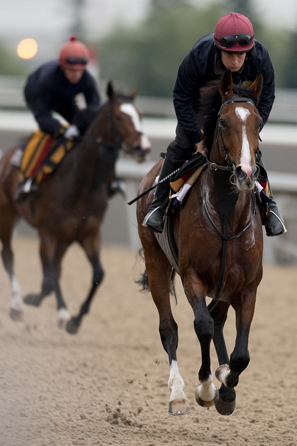 Idaho training at Woodbine Racetrack prior to Sunday's Pattison Canadian International. Photo by Michael Burns