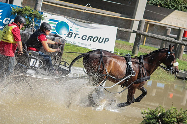 Canada's Kelly Houtappels-Bruder and her horse, Flip, navigate through the marathon phase of the 2016 FEI World Single Driving Championships, where they placed seventh overall. Photo by Krisztina Horvath/Hoefnet.com