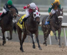 Line of Vision winning the Victorian Queen Stakes on Saturday, Oct. 14 at Woodbine Racetrack. Photo by Michael Burns