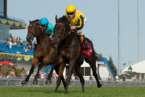 Quidura winning the Canadian (Grade 2) Stakes on September 16 at Woodbine Racetrack. Photo by Michael Burns