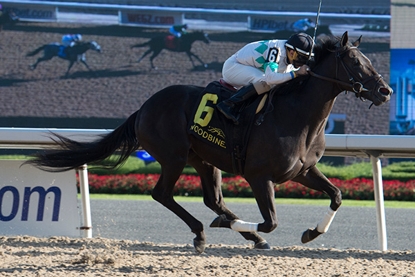 Archaggelos winning the Grey Stakes on October 1 at Woodbine Racetrack. Photo by Michael Burns