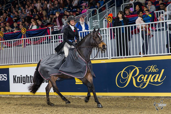 Darcy Hayes of Aurora, ON, rode Say When to a second consecutive victory in the $15,000 Braeburn Farms Hunter Derby for owner Danielle Trudell-Baran on Sunday, November 5, at the Royal Horse Show in Toronto, ON. Photo by Ben Radvanyi Photography