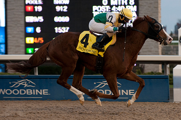 Ghostly Presence winning the $125,000 Jammed Lovely Stakes on Saturday, Nov. 11 at Woodbine Racetrack. Photo by Michael Burns