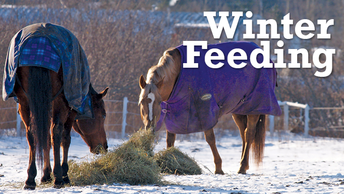 Thumbnail for Winter Feeding