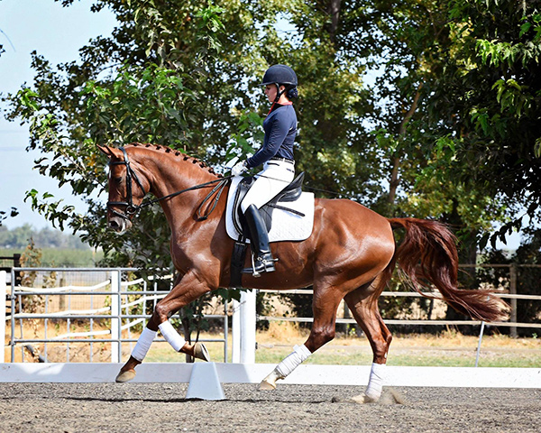 Photo by Tamara courtesy of Christiane Noelting Dressage Centre, CA