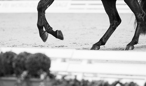 OTTO Sport International, known globally for producing footing for equestrian arenas at the world's biggest events, will now be helping FEI Campus users with invaluable footing advice and sharing their knowledge of helping horses to stay physically healthy. Photo by FEI/Cara Grimshaw