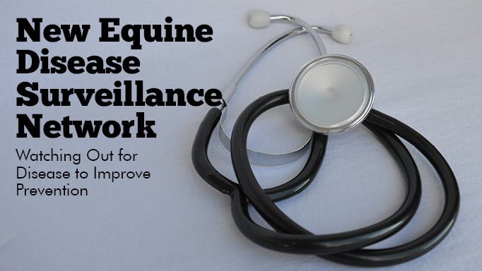 Thumbnail for Halting Infectious Equine Disease Outbreaks