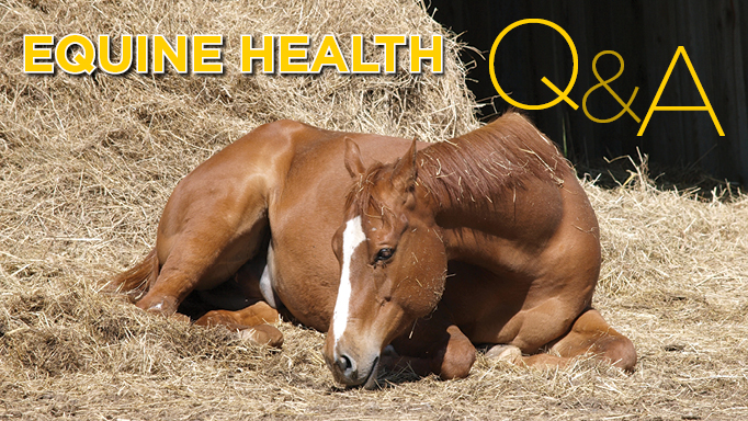 Thumbnail for Tackling Common Equine Ailments