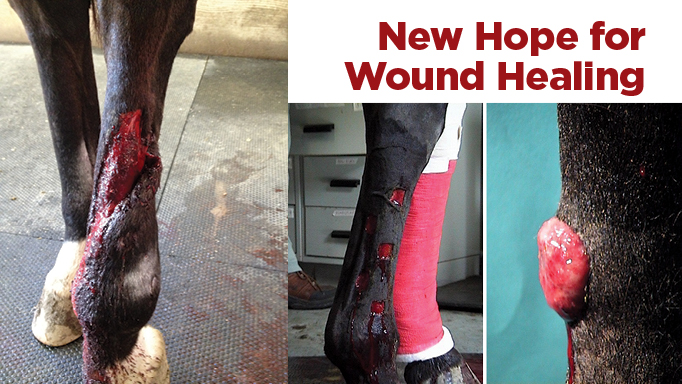 Thumbnail for New Hope for Wound Healing