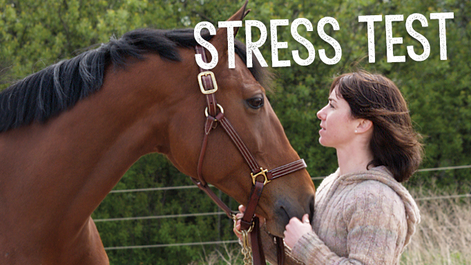 Thumbnail for How Can I Reduce My Horse's Stress?