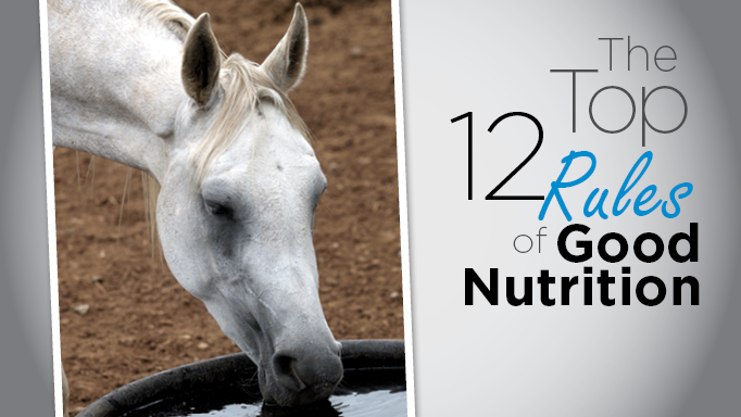 Thumbnail for 12 Top Rules for Feeding Horses