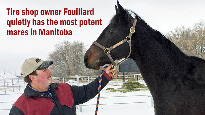 Thumbnail for Most Potent Broodmares in Manitoba