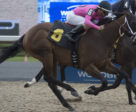 Mark Casse-trained Safe to Say winning on August 7 at Woodbine Racetrack.
