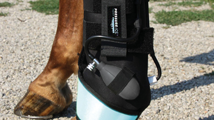 Thumbnail for Is the RICE Protocol Helpful for Horses?