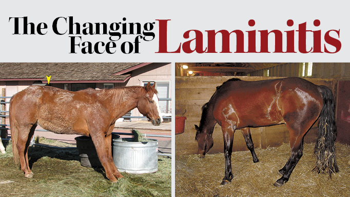 Thumbnail for The Changing Face of Laminitis