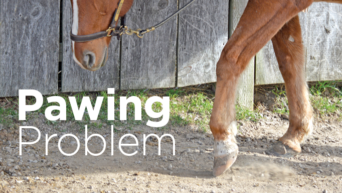 Thumbnail for Why Horses Paw and How to Prevent It