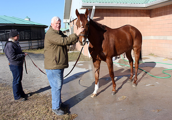 The first horse, Trapper's Delight, arrives at Woodbine on Tuesday, Feb. 27. Photo by Keith McCalmont