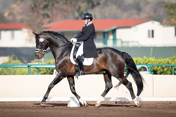 Sara Pocock and her horse, Connaisseur placed in the top three in each of their CDI 1* small tour classes at the Adequan West Coast Dressage Festival IV, held Feb. 14-17, 2018 in Del Mar, CA. Photo by Terri Miller