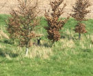 A deer I spotted on my gallop.
