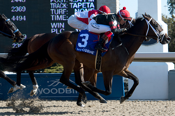 Silent Sting and jockey Luis Contreras winning the $125,000 Queenston Stakes on Sunday, April 22 at Woodbine Racetrack. Photo by Michael Burns