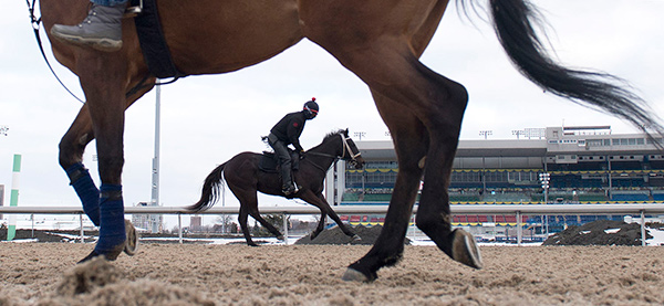 Thoroughbreds return to Woodbine for Opening Day on April 21, 2018. Post time is 1 p.m. Photo by Michael Burns