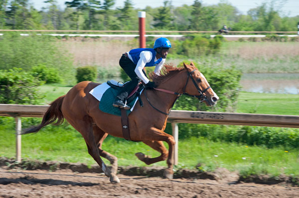 Dr. Harkness and jockey Howard Newell preparing for another season at Fort Erie Race Track.