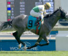 Final Copy winning the Singspiel Prep over Woodbine's E.P. Taylor Turf Course on Friday, May 25.
