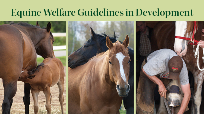 Thumbnail for Equine Welfare Guidelines