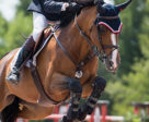 Ten-time Canadian Olympian Ian Millar of Perth, ON, was second in both the $35,500 CSI2* Grand Prix, presented by Case IH, and the $35,500 CSI2* Open Welcome riding Vittorio 8 during the CSI2* Classic at Palgrave Phase II tournament in Caledon, ON.