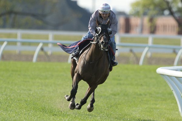 Thumbnail for Fan favourite Tower of Texas will defend Connaught Cup title at Woodbine