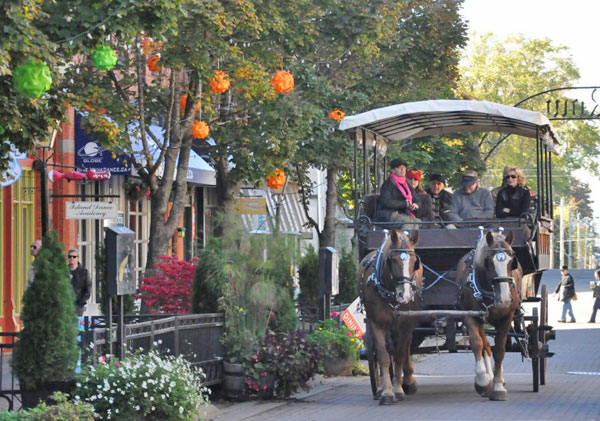Thumbnail for Animals Rights Group Wants Horse-Drawn Carriage Ban in PEI