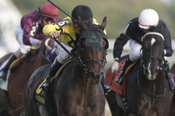 Mr Havercamp winning the 2017 Bunty Lawless Stakes at Woodbine Racetrack.
