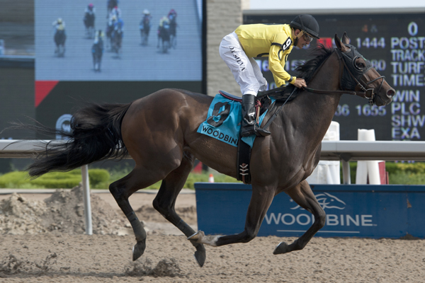 Mr Havercamp and jockey Eurico Rosa Da Silva winning the $100,000 Steady Growth Stakes on Saturday, June 16 at Woodbine Racetrack.