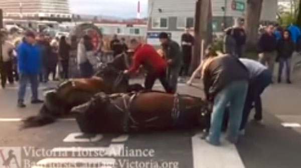 Thumbnail for BC SPCA Urges Ban on Horse-Drawn Carriages on City Streets