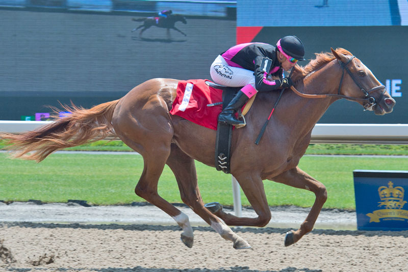Armistice Day and jockey Luis Contreras winning on July 1 at Woodbine Racetrack. Michael Burns Photo