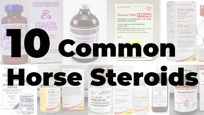 Thumbnail for 10 Common Horse Steroids