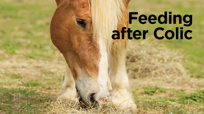 Thumbnail for Feeding After Colic