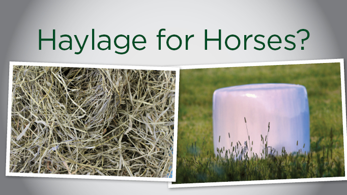 Thumbnail for Haylage for Horses?