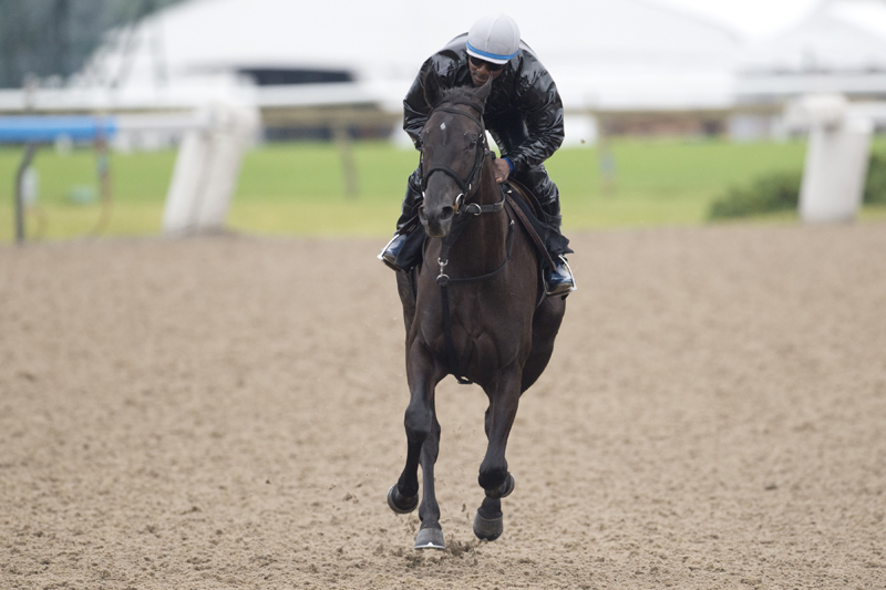 Inge galloping at Woodbine Racetrack on June 27 prior to the Queen's Plate.