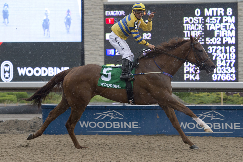 Pink Lloyd winning the Achievement Stakes on June 3 at Woodbine Racetrack.