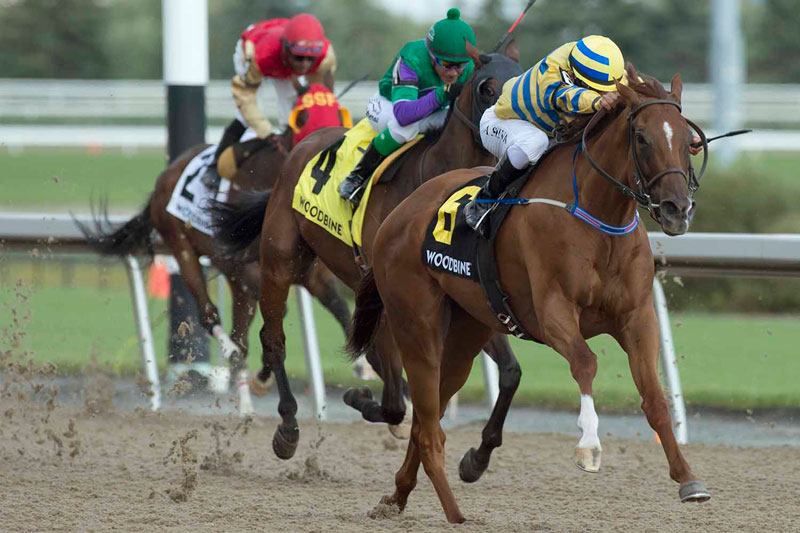 Pink Lloyd won the $150,000 Grade 3 Vigil Stakes, at Woodbine. Photo by Michael Burns