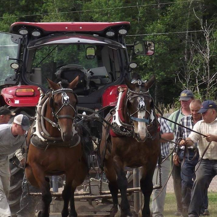 Eldon Rideout (far right) and his grandson, Michael Goodwin (far left), were killed on July 21st along with two horses they were hauling to a horse pulling event in New Brunswick. Photo Facebook/Eldon Rideout
