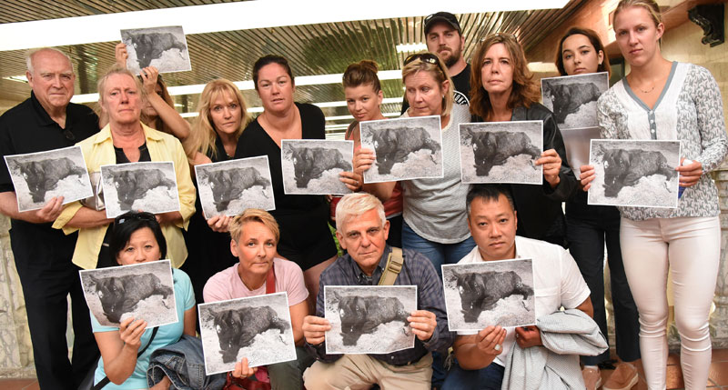 Armed with photos of one of the starving yearlings found on the Stouffville farm rented by the Small family, horse advocates waited to confront David Lee, Victoria and Jason Leroy at court on July 6, 2018. Photo by Susie Kockerscheidt/Metroland Media