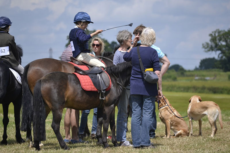 A potential new rule may mean dogs must be leashed at FEI horse shows.