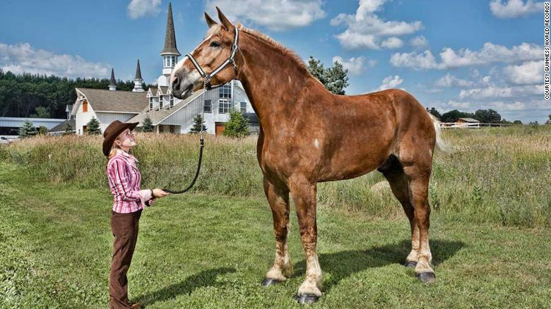 Big Jake - tallest horse in the world - Belgian Draft Horse - image courtesy of CNN