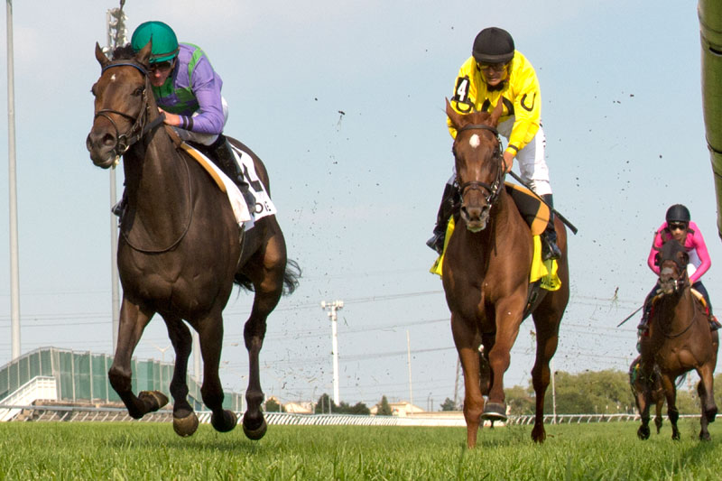 Avie's Mineshaft (#2) defeats Dixie Moon (#4) in the $225,000 Wonder Where Stakes on Sunday, August 12 at Woodbine Racetrack. Michael Burns Photo