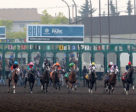 Coming out of the gate for the Canadian Derby, the last Thoroughbred race at Northlands. Photo by Lisa Thompson