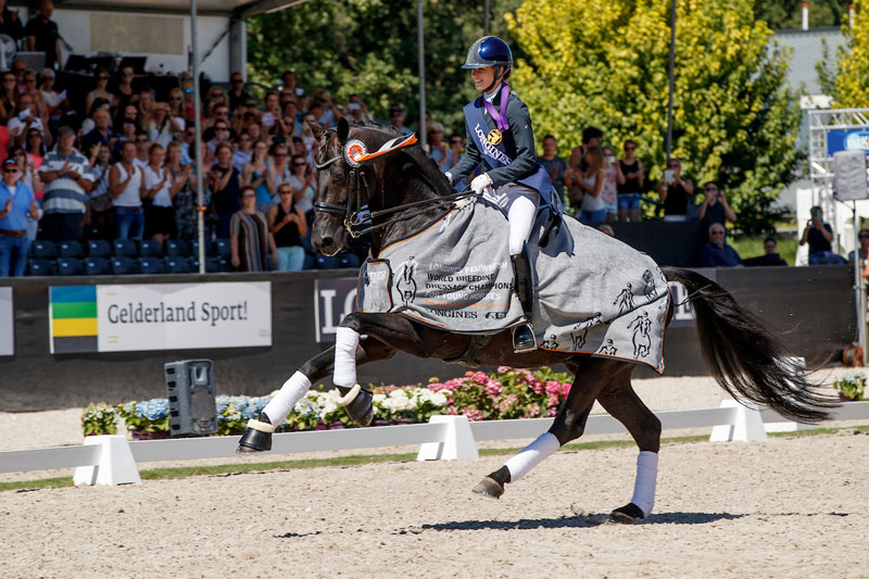 The fabulous black stallion, Glamourdale, won the Seven-Year-Old Final for Great Britain's Charlotte Fry at the Longines FEI/WBFSH World Breeding Dressage Championships 2018 in Ermelo (NED). Photo by FEI/Dirk Caremans