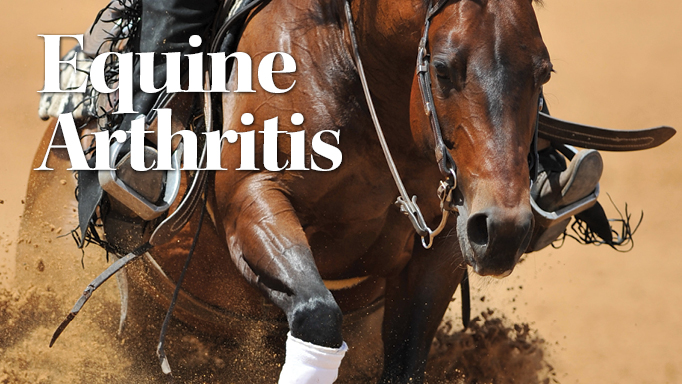 Thumbnail for Modern Treatments for Equine Arthritis